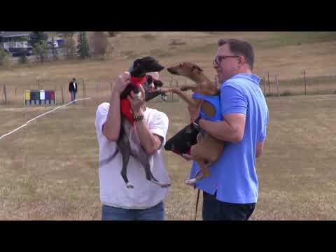 Aspen Grove Sighthound Association (AGSA)