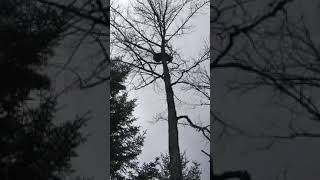 Медведь срёт с дерева