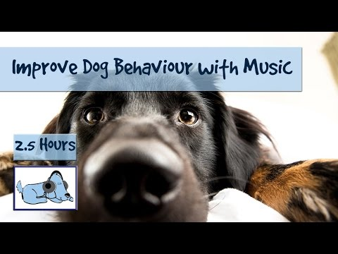 Improve Your Dogs Anti Social Behaviour with relaxing, Calming Dog Music
