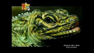 rctv s make my trip travel tv agusan marsh