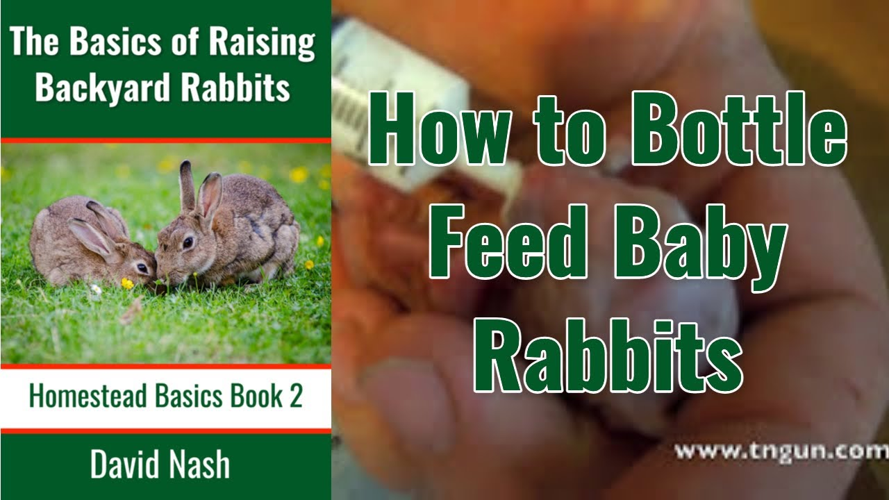 How to Bottle Feed Baby Rabbits