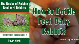 Bottle Feeding Baby Rabbits