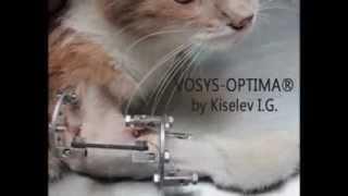 Кошка со сложным перелом передней лапы