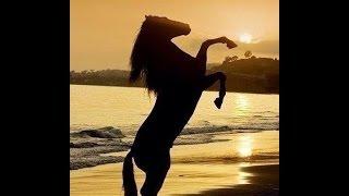 Жанна ГВАЗАВА -  Заклинание коней!   Красивая средневековая  баллада! Красивые фото лошадей!!!