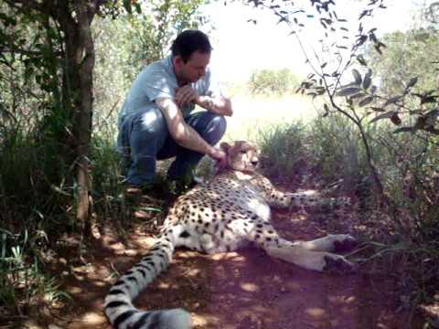 Cheetah Encounter 2 - Mokolodi Nature Reserve - Gaborone, Botswana 19th Feb 2010