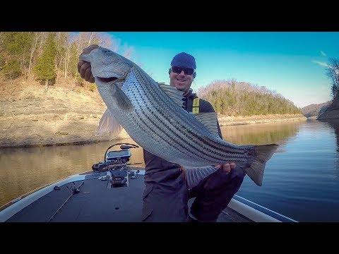 Winter Bass Fishing - Lake Cumberland