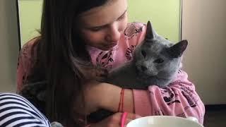 Русские голубые котята. Русская голубая кошка. Питомник Ruzara.