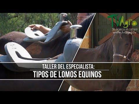 El Taller Del Especialista: Tipos De Lomos Equinos - TvAgro Por Juan Gonzalo Angel