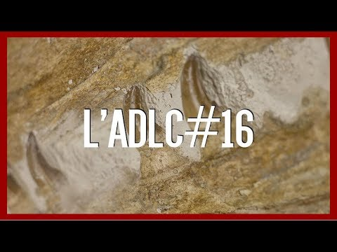 Harun Yahya… - l'ADLC#16