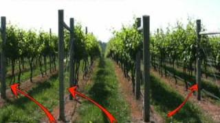 Grape Trellis Systems