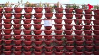 صور وفيديو| زراعة أسطح عمارات «غيط العنب» بالزهور والخضراوات
