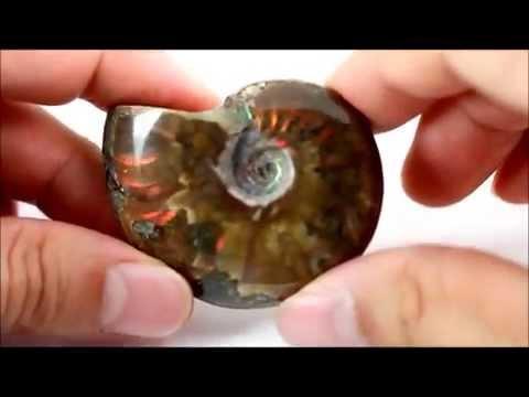 ファイヤーアンモナイト 化石 36g / Ammonoidea