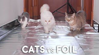 Can Munchkin Cats Walk On Foil?