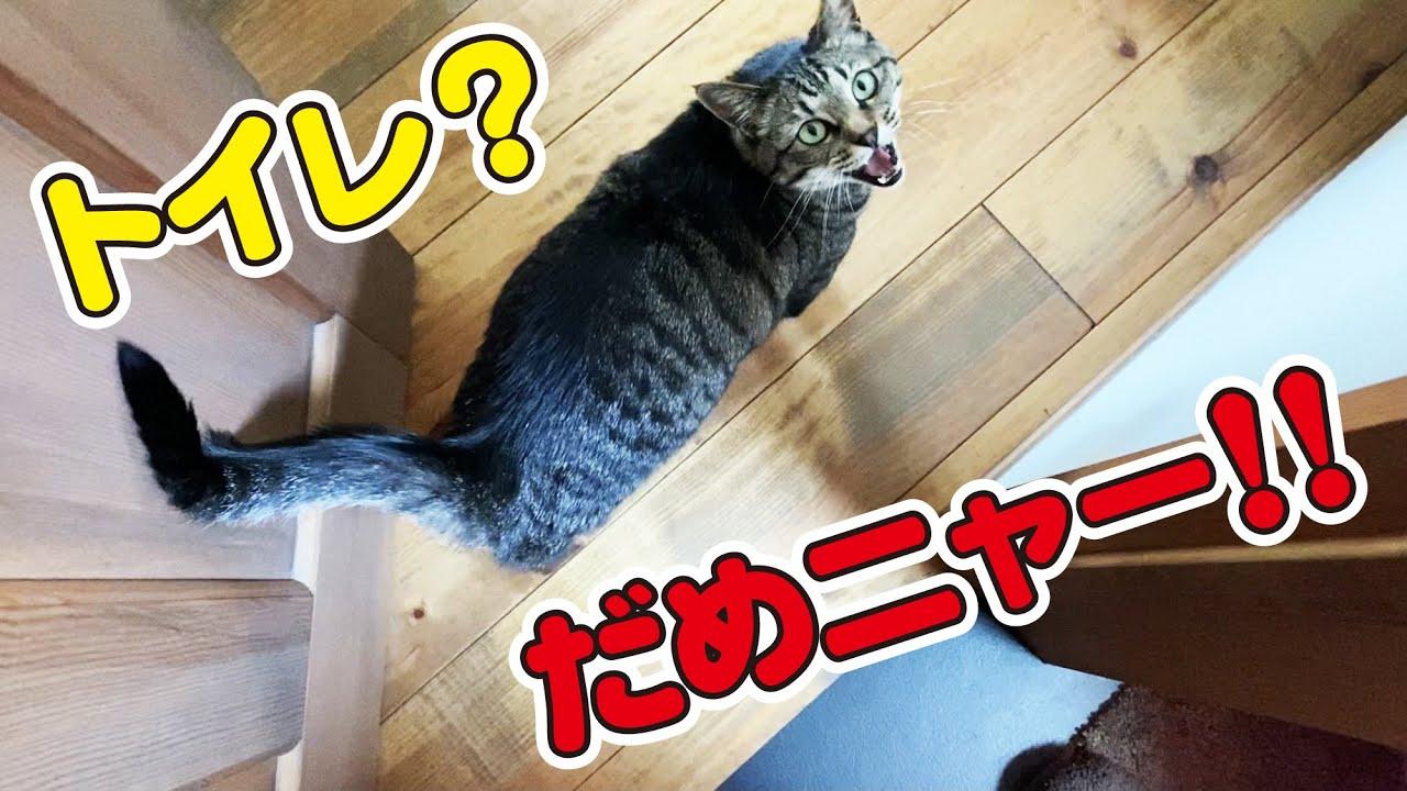 トイレにも行かせてくれない猫