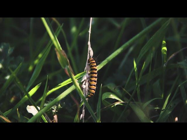'Delapre'   Cinematic Landscape Film Shot on GH5 D810 and D5300   Phase Drive Media