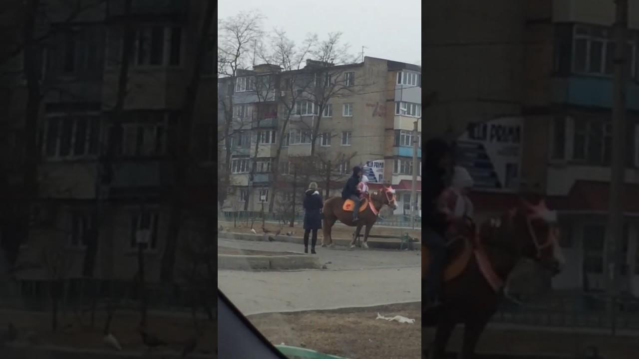 Издевательство над беременной лошадью в Находке