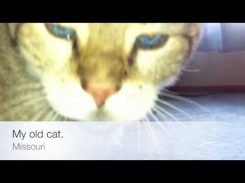 My Old Cat: iPhone 4 Video/Camera/iMovie Quality Test.