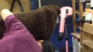 K・DOG 埼玉県さいたま市にあるペットショップです。愛犬の幸せを考えた...
