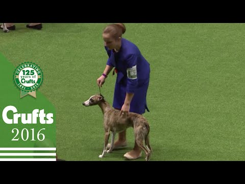 International Junior Handling Competition Part 3 | Crufts 2016