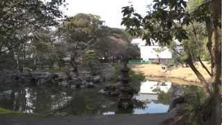 鹿児島市にある薩摩藩第27代当主島津斉興が造営した庭園の様子です。