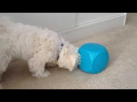 Buster Food Cube Toy for dogs