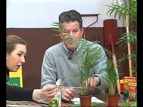 El Jardinero En Casa La Yucca Doovi