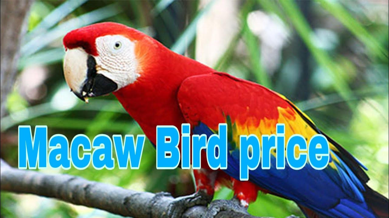 Top 06 Macaw bird price for India ( 2019 -- 2020 )