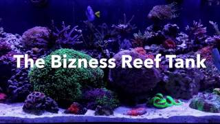 Channel Appetizer | Ep.4 | The Bizness's 180 Gallon Mixed Reef