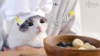 고양이와 함께하는 브런치 cat made cereal