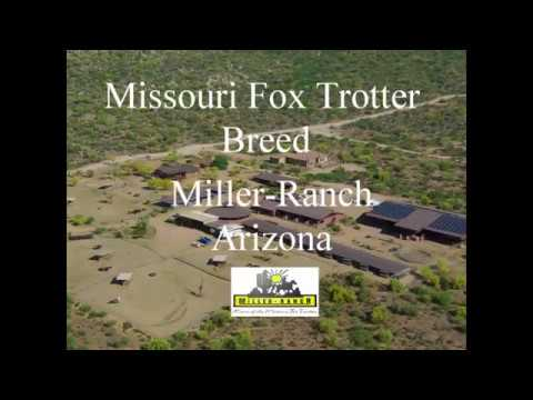 Miller-Ranch - Missouri Fox Trotter Breeder