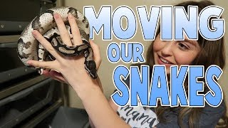 moving our snakes into new homes   family baby vlogs