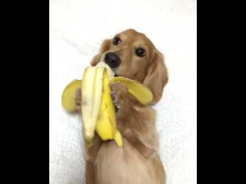 Dog vs. Banana