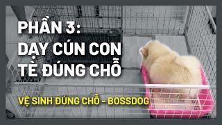 Dạy chó đi vệ sİnh (#BOSS063) Tập cún c๐n mới nuôi đi vệ sinh? | Cнi tiết - thành công | BossDog