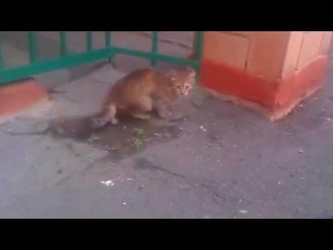 Котики, вперед! - Оставайся на месте! (29 серия)