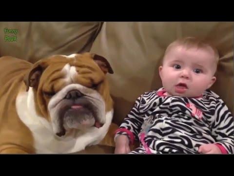 Video lucu bayi dengan binatang imut banget bayinya