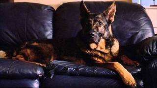 Retrieved: The Search and Rescue Dogs of 9-11
