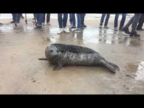 Тюлень ругается:)