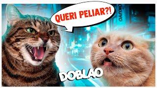 QUERI PELIAAAR? 🐱 | DOBLAO