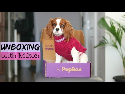 Cavalier King Charles Puppy Milton | February Pupbox Unboxing | Herky the Cavalier
