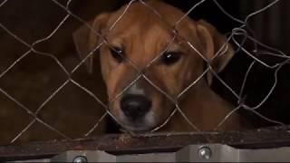 Третій рік поспіль виловом бездомних собак займуться фахівці ''Ремонтно-будівельної компанії''