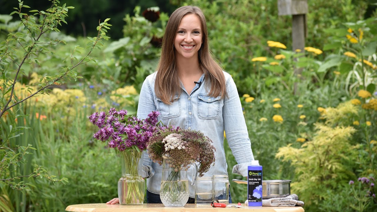 How to hydrate wilt prone flowers 🌼 // Cut Flower Gardening with Northlawn Flower Farms