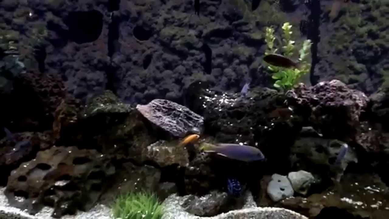 Diy Aquarium Background Caves Using Pvc And Great Stuff Foam