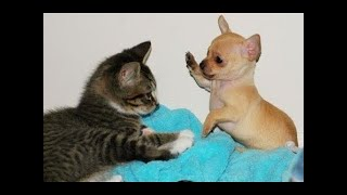 Funny Dogs and Cats videos compilation #23