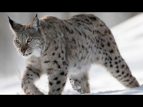 Вопрос: Какое самое активное в зимний период животное?