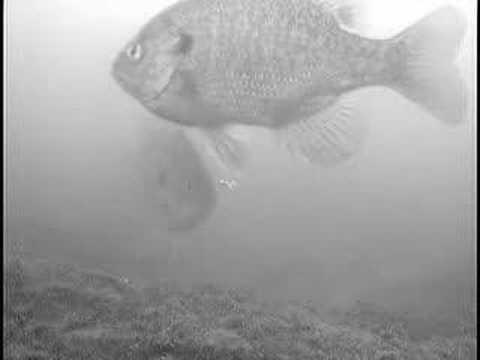 Ice fishing underwater camera youtube for Underwater ice fishing camera