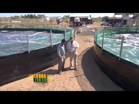 TIERRA FÉRTIL Producción de camarón (18 de abril de 2015)