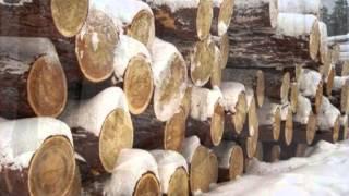 видео Чем отличается сруб из зимнего леса от летнего