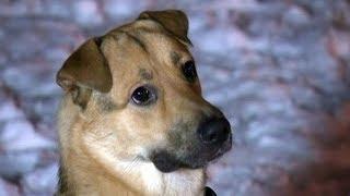 Бездомные собаки в Петербурге