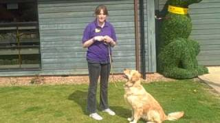 Dogs Trust West London: Clicker Training
