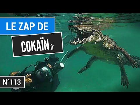Le Zap de Cokaïn.fr n°113